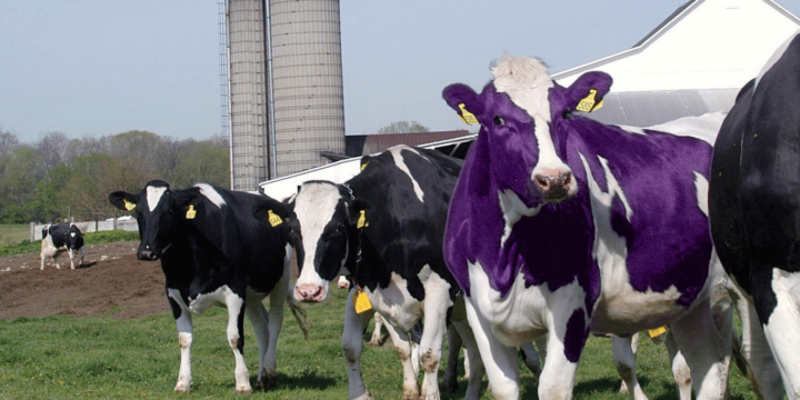 Embrace 'Remarkable Marketing' — Find Your Purple Cow on Campus